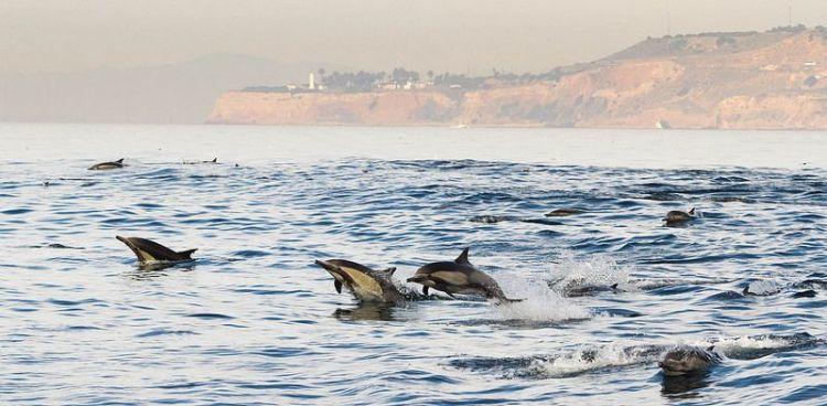El delfín | Características, alimentación, hábitat, inteligencia 2