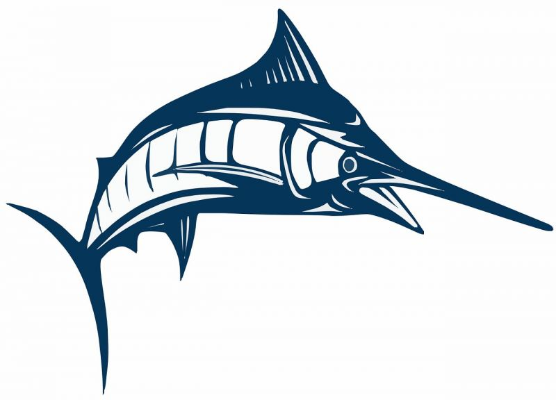 El pez de espada caracter sticas qu come h bitat consumo for Curiosidades del pez espada