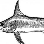 El pez de espada