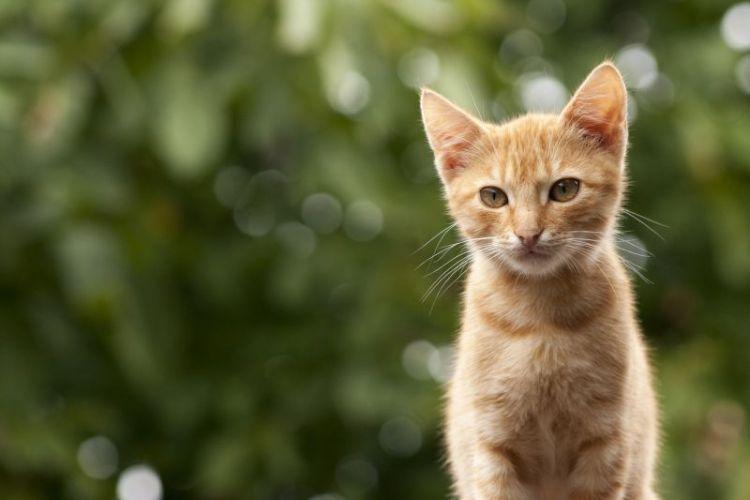 gatos, caracteristicas, alimentacion, comportamiento