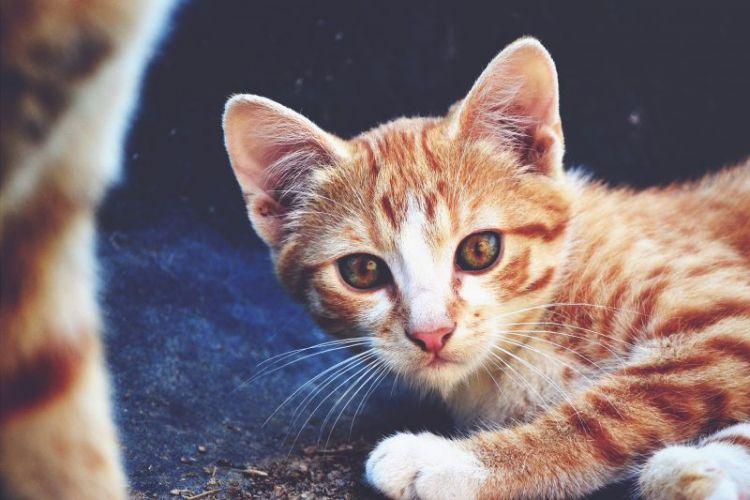 nombres para gatos machos