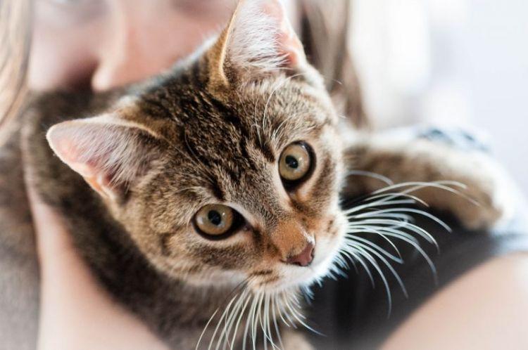 nombres para gatos