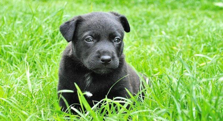 nombres para perros hembras