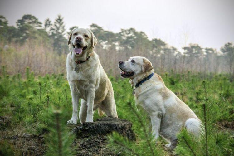 perro, caracteristicas, alimentacion, comportamiento