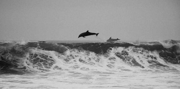 cómo nacen los delfines