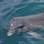 cómo respiran los delfines
