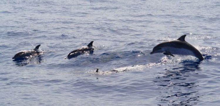 de que se alimentan los delfines
