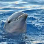 Dónde viven los delfines