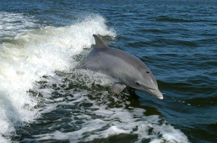 el nacimiento de los delfines