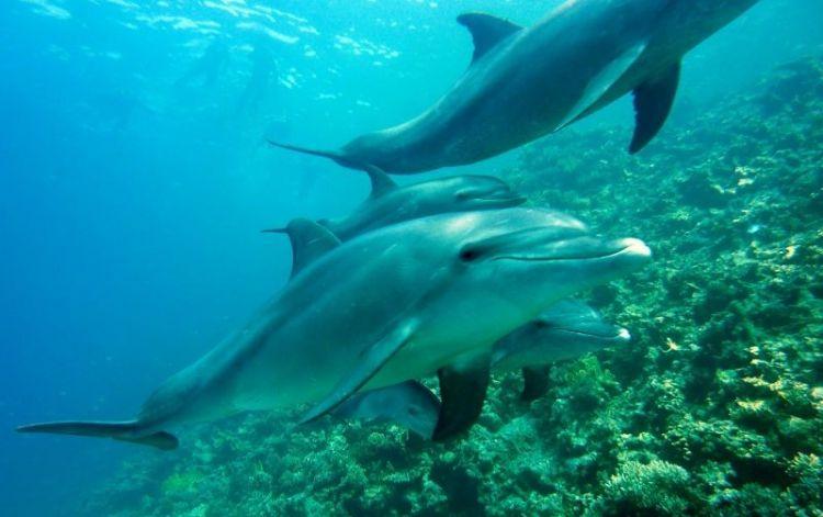 por dónde respiran los delfines