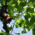 Qué comen los murciélagos