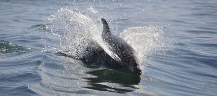 qué sonidos emiten los delfines