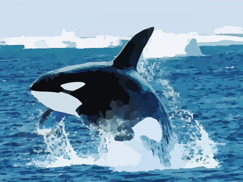 orca azul wallpaper - photo #14