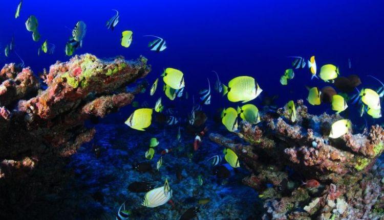 por dónde respiran los peces