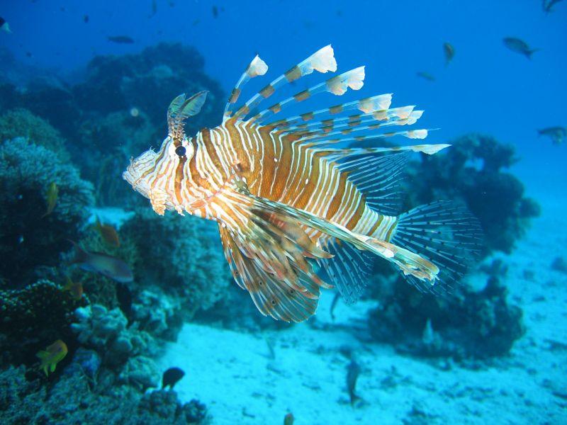 El pez león