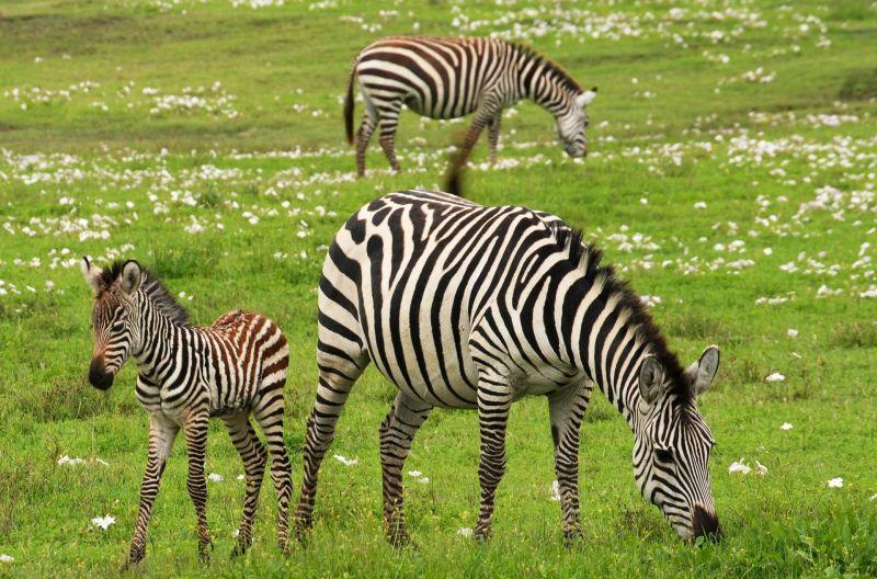Animales vivíparos, qué son, especies, ejemplos, definición, reproducción