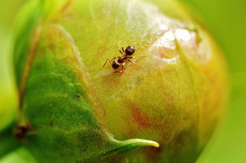 Hormiga Características Organización Social Reproducción