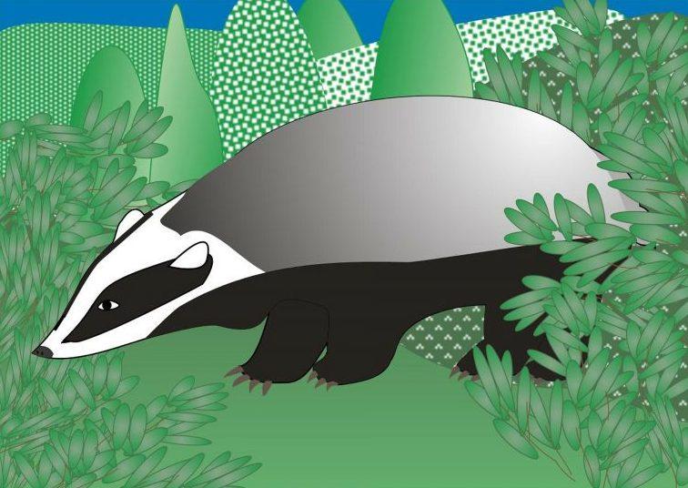 Tejón Características, hábitat, reproducción, comportamiento