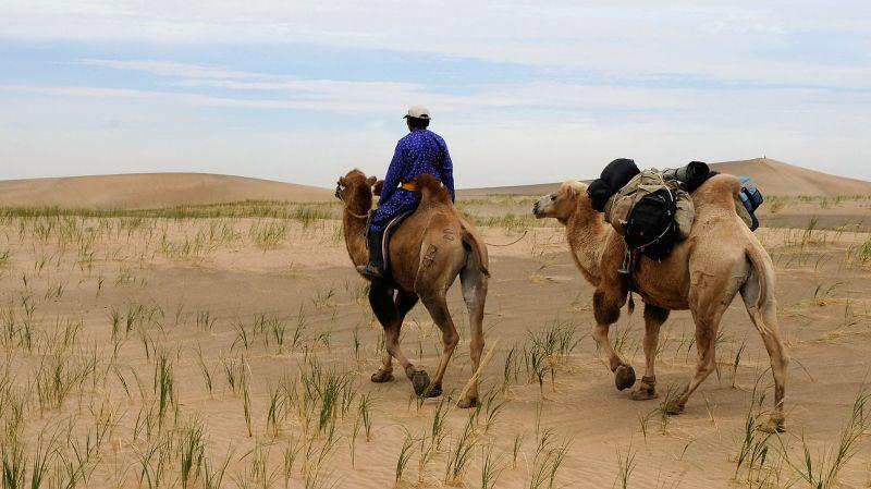 Camello Características, alimentación, información, hábitat Animal