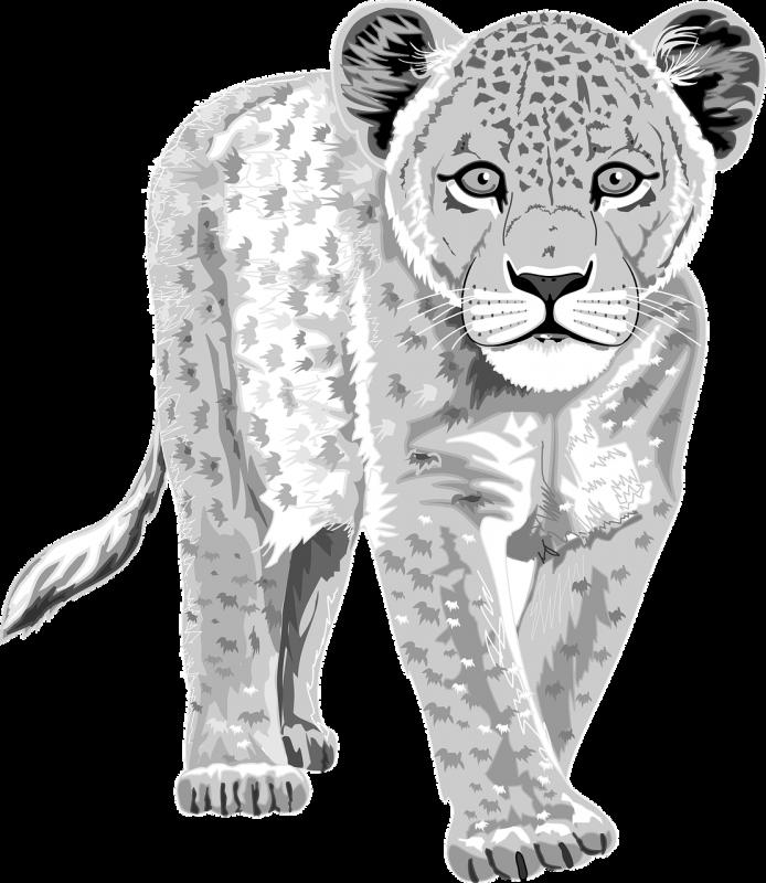 Pantera blanca