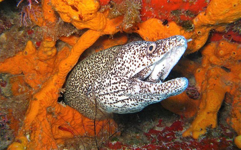 La anguila