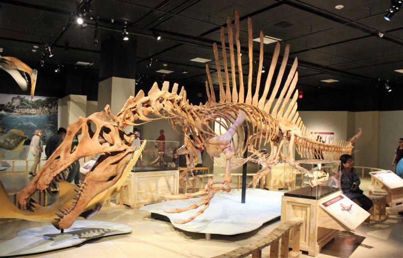 Spinosaurus Características, historia, información, hábitat Dinosaurio