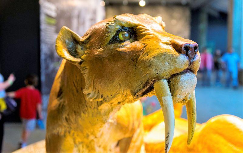 Tigre Dientes De Sable Características Hábitat Alimentación Extinción