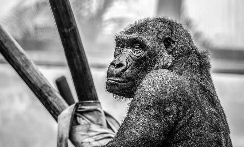 Primates Qué son, información, hábitat, dónde viven, alimentación, tipos