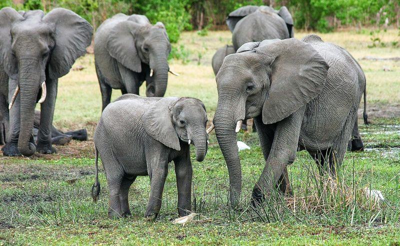 Animales cuadrúpedos Qué son, descripción, desplazamiento, ejemplos