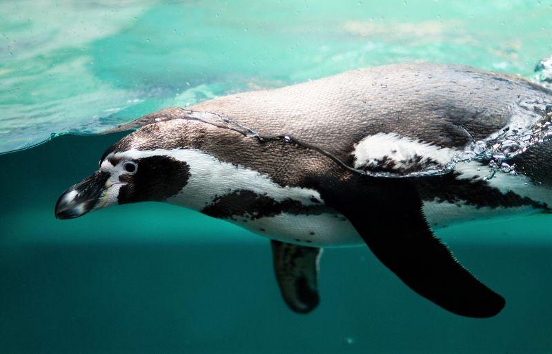 Animales acuáticos Características, alimentación, hábitat, clasificación