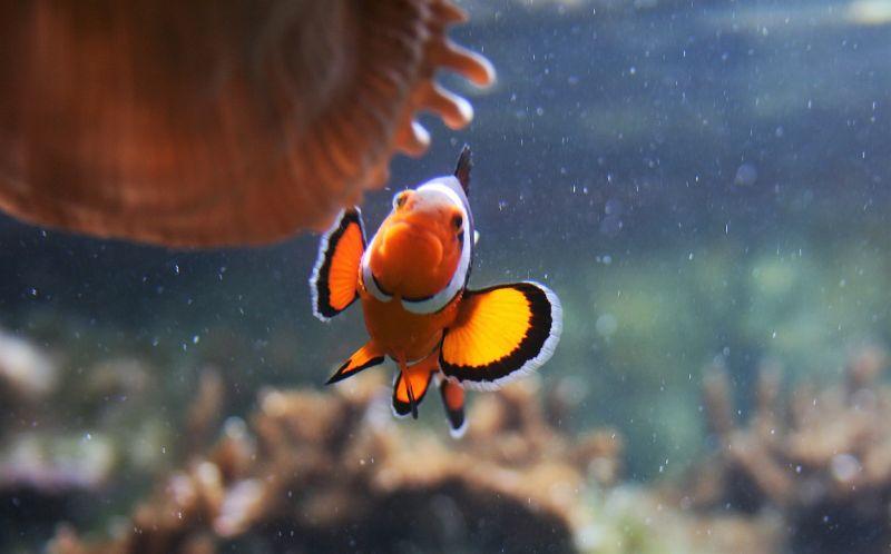 Animales marinos Qué son, clasificación, alimentación, amenazas