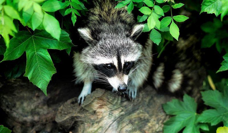 Animales silvestres Qué son, hábitat, alimentación, ejemplos, información