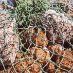 Esponjas de mar