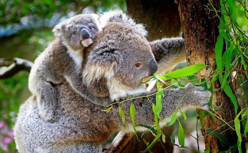 Los marsupiales