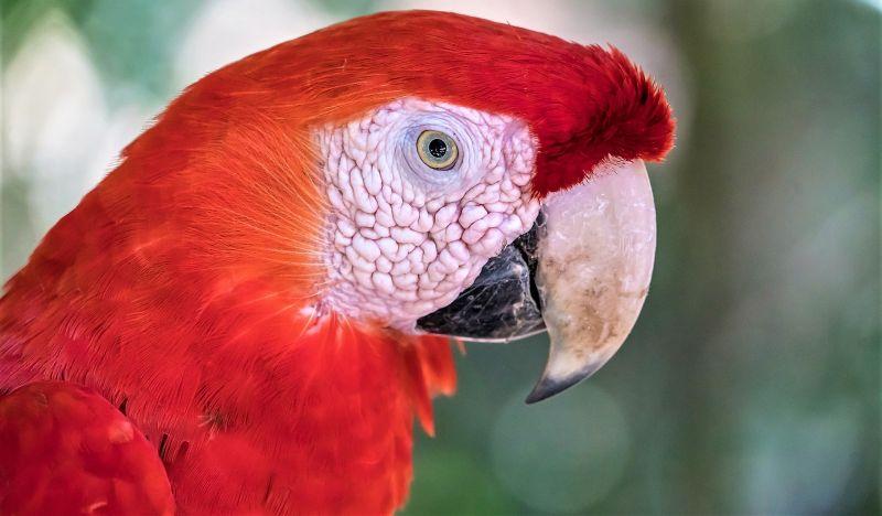 Animales exóticos Qué son, mascotas, comercio, ventajas, desventajas