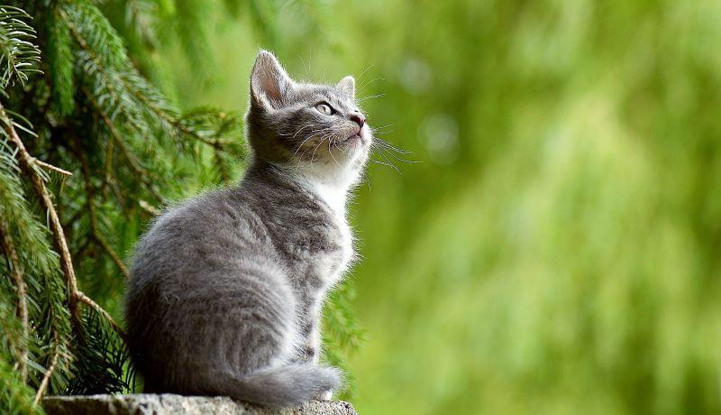 Animales terrestres Qué son, clasificación, datos de interés, información